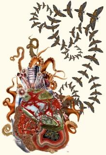 collage-illsutration-scientifique-03-547x800